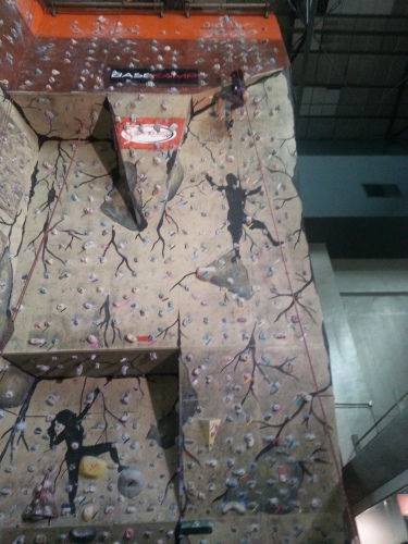 The rope is connected to the climber's harness and looped at the top of the wall and is fastened to the belay device on the ground